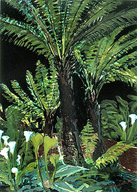 Fern Tree Forest