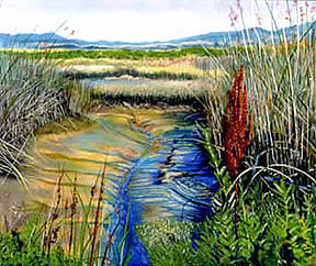 San Pablo Bay Wetlands